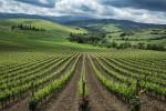 The vineyards of Tuscany