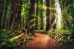 Sunrise at Jedediah Redwoods State Park