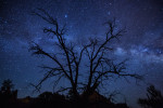 milky_way_sedona_tree_3