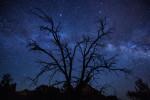 milky_way_sedona_tree_3