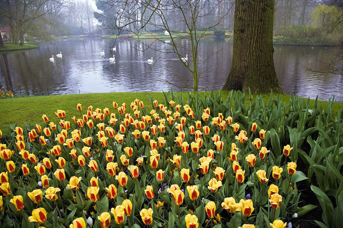 keukenhof gardens in Amsterdam