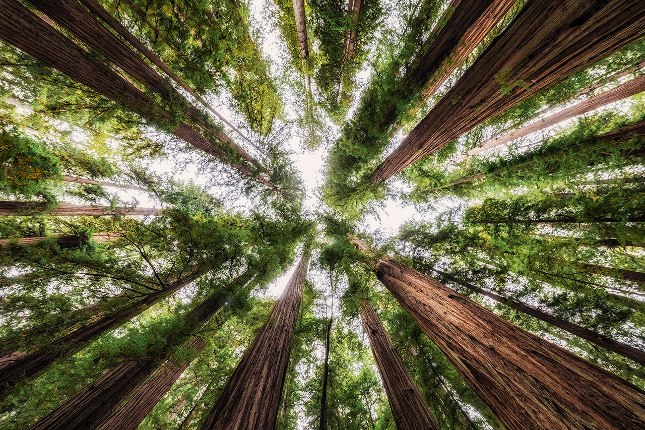 Jedediah Smith State Redwood Forest