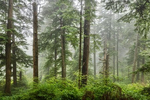 The forests outside of Cannon Beach, Oregon