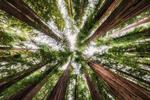 oregon_coast_stunning_2019_forest_beauty