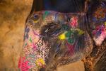 painted_elephant_india_beauty