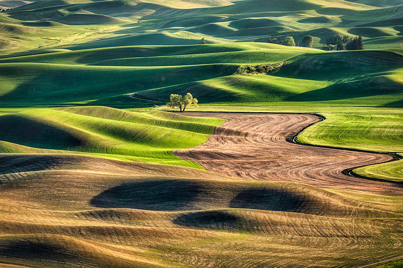 My favorite lone tree in the Palouse
