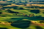 View from Steptoe Butte