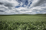palouse_workshop_035