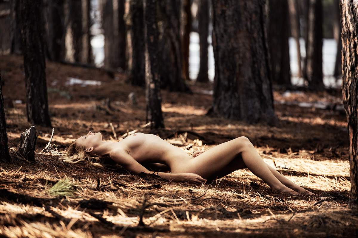 sydney_forest_7