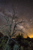 tree_milky_way_2