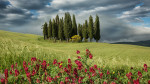 tuscany_val_dorcia_red_flowers_intro_italy