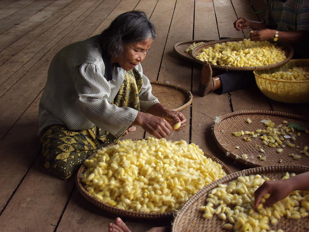 Landmine victims sorting silkworm cocoons