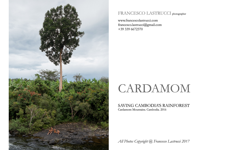 cardamom-1