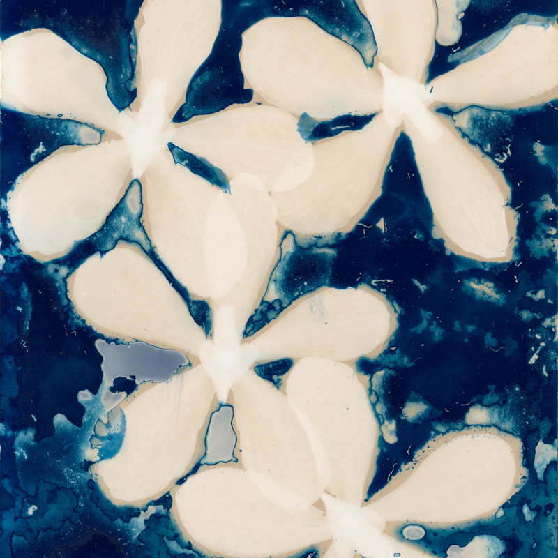 Orchids (detail).  Lumen Print with Cyanotype from the Series, In My Courtyard.  ag_0000_5226  Color Rights Managed Image Copyright © 2020 Ann Giordano All Rights Reserved