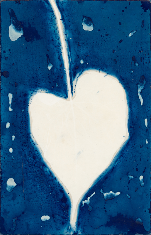 Heart Shaped Leaf.  Lumen Print with Cyanotype from the Series, In My Courtyard.  ag_0000_5230  Color Rights Managed Image Copyright © 2020 Ann Giordano All Rights Reserved