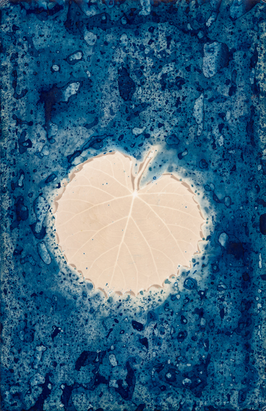 Leaf.  Lumen Print with Cyanotype from the Series, In My Courtyard.  ag_0000_5242 Color Rights Managed Image Copyright © 2020 Ann Giordano All Rights Reserved