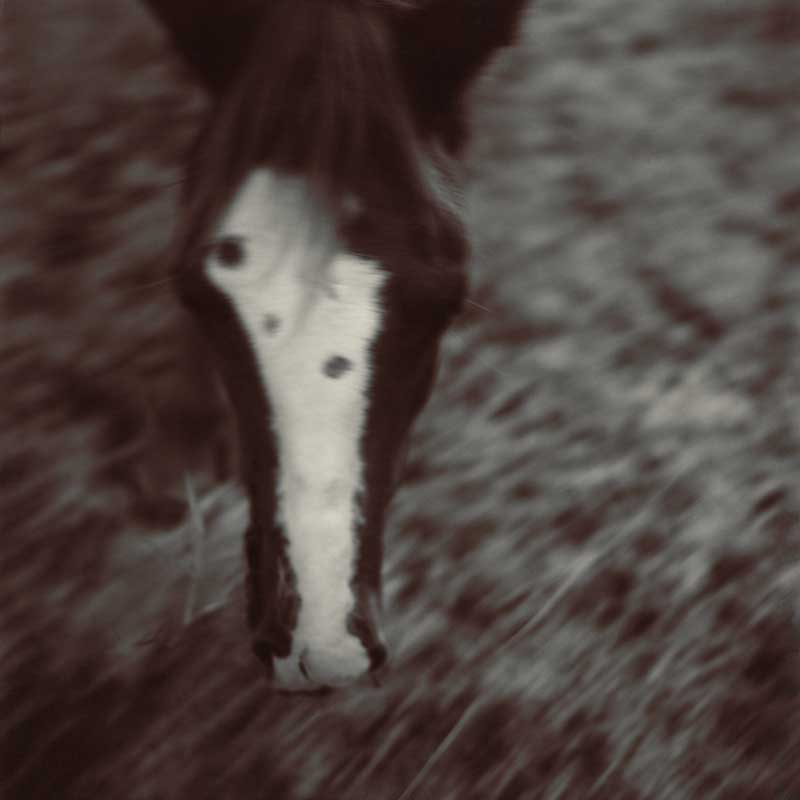 Horses.  Close up of horse head, top view.    ag_0000_1034 Toned BW Rights Managed Image Copyright © 2002 Ann Giordano All Rights Reserved