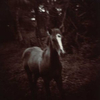 Horse.  Horse in wooded area.    ag_0000_1035 Toned BW Rights Managed Image Copyright © 2002 Ann Giordano All Rights Reserved