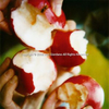 APPLES 0000.1156 LIFE IMAGES© ANN GIORDANO ALL RIGHTS RESERVED