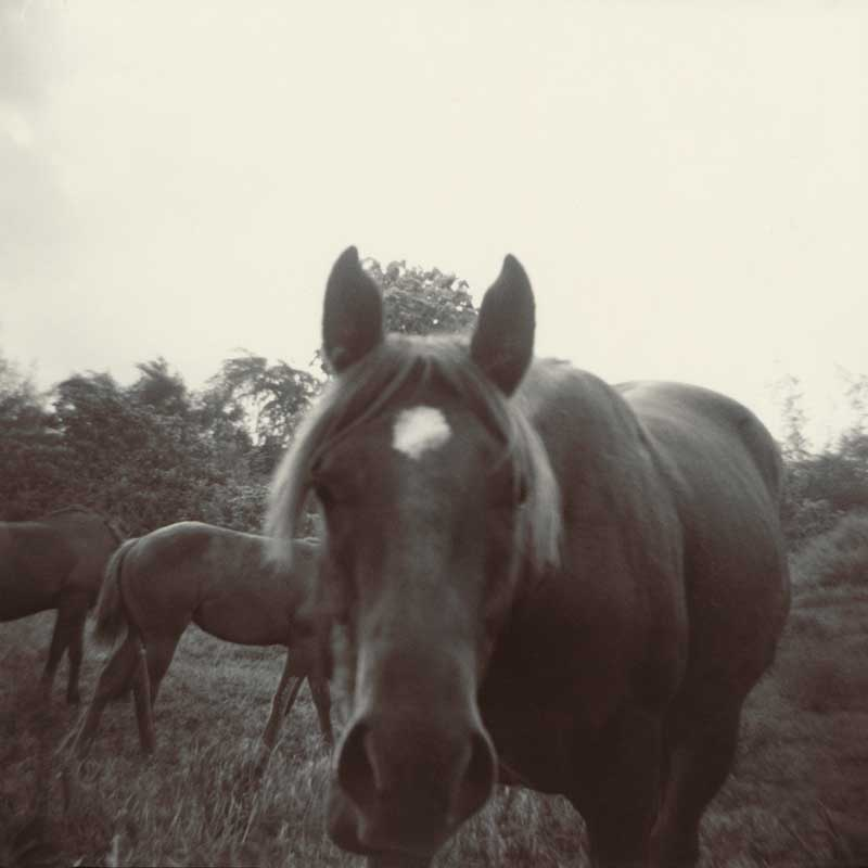Horses.  Horses in field.  ag_0000_2052 Toned BW Rights Managed Image Copyright © 2010 Ann Giordano All Rights Reserved