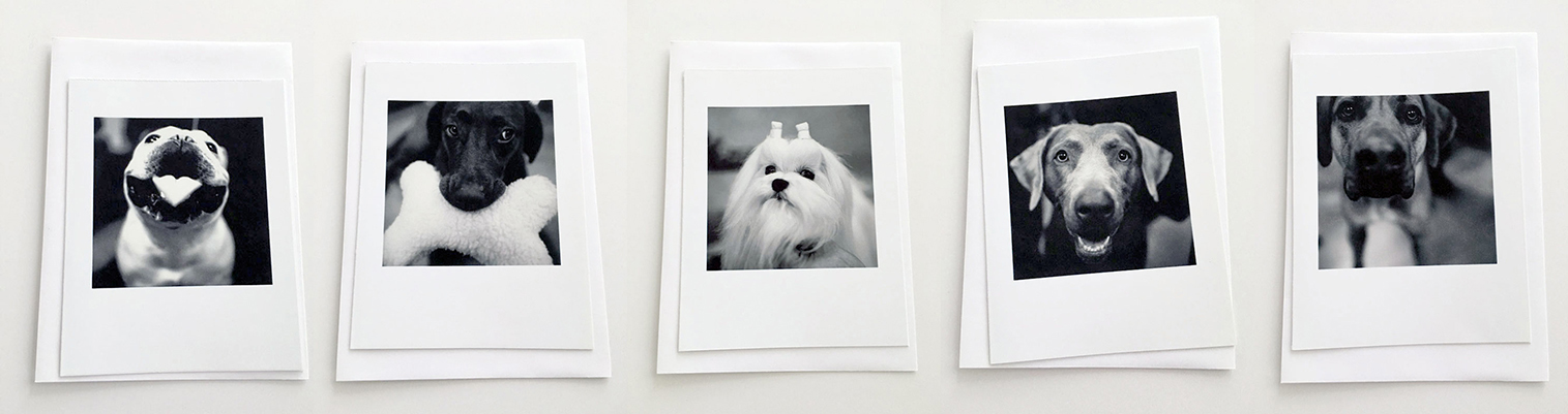 Five Blank Cards from DOG SHOW with envelopes5.5 x 4.25 inches 1000.0050****$30.00 plus Shipping and Handling