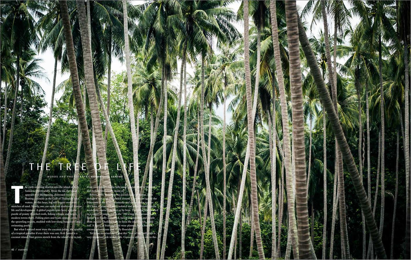 Koh-Samui-Coconuts-1