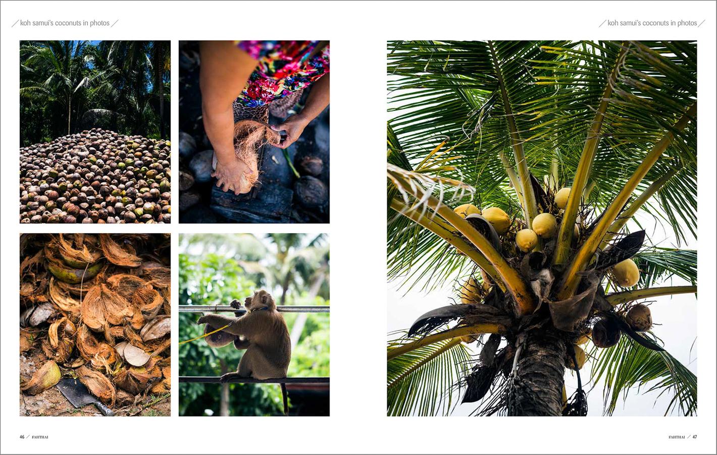 Koh-Samui-Coconuts-4