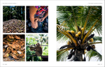 A feature travel story and photo essay on Ko Samui's coconut trade.