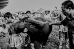 A large bull is led to the stadium at the Buffalo Fighting Festival in Do Son, Vietnam.