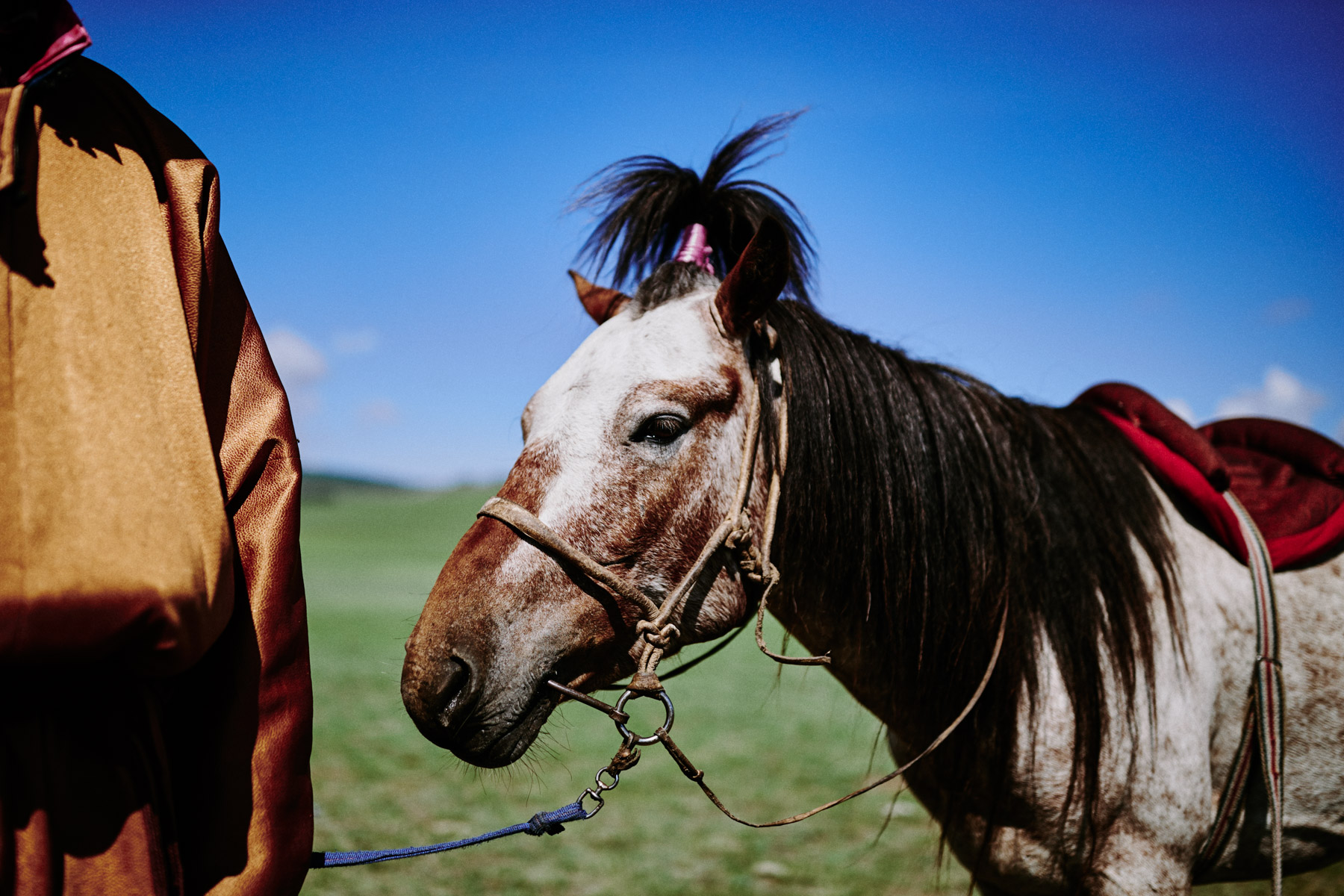 Horse with the good hair in the wilds of northern Mongolia.
