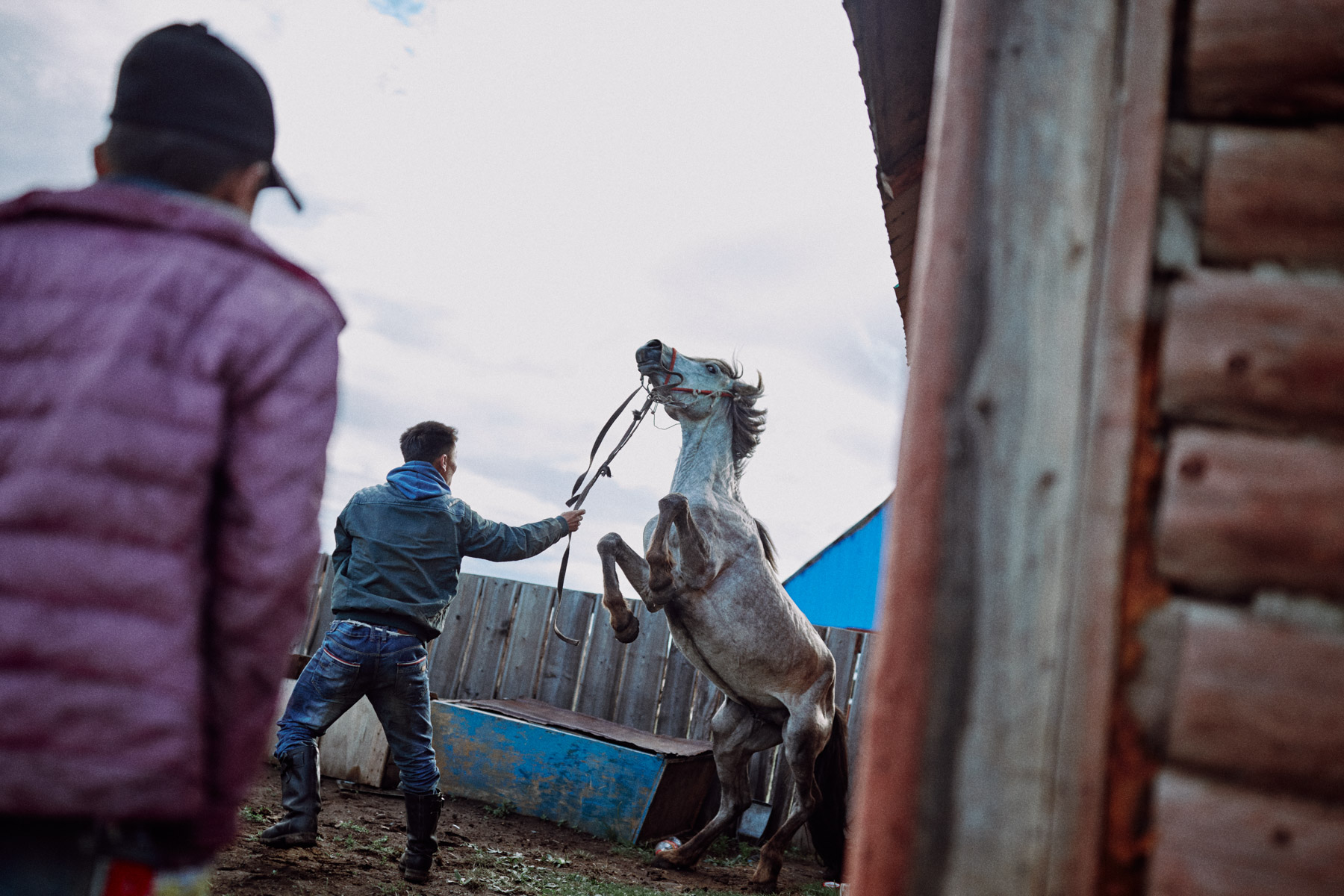 Two men attempt to break in a wild horse in northern Mongolia.