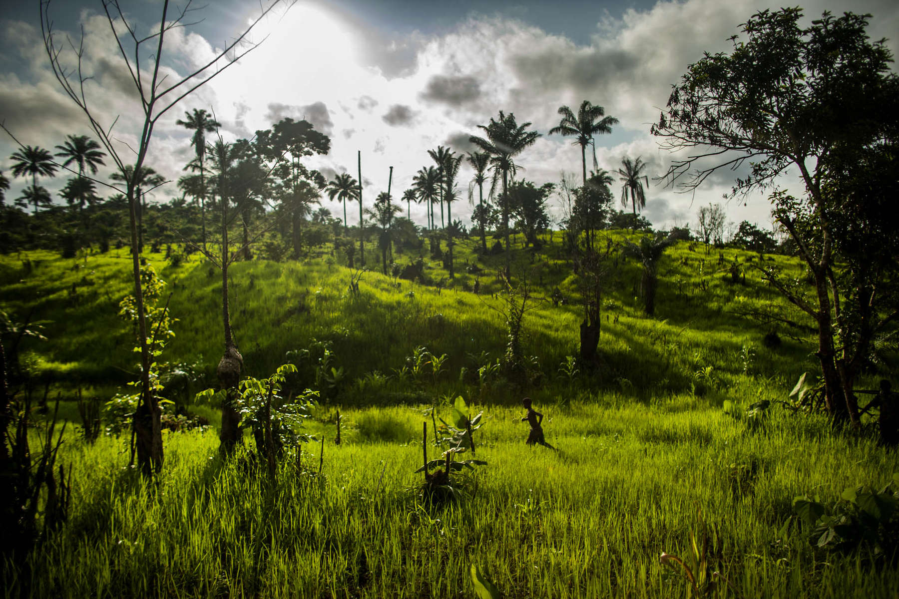 A boy wanders through a field of rice near the village of Dia, Sierra Leone on Monday, August 18, 2014. Sierra Leone has been heavy affected by the Ebola outbreak in West Africa with many of its cases found in rural areas. (Pete Muller/Prime for the Washington Post)