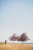 buffalo-outer-harbor-minimalist-field-trees-wedding-photography