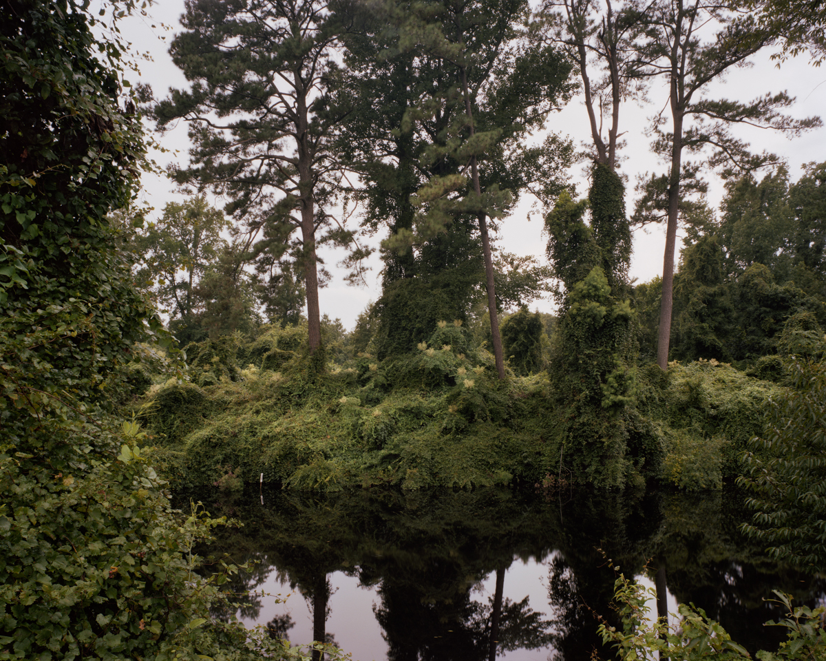 The Great Dismal Swamp, Virginia/ North Carolina border 2009