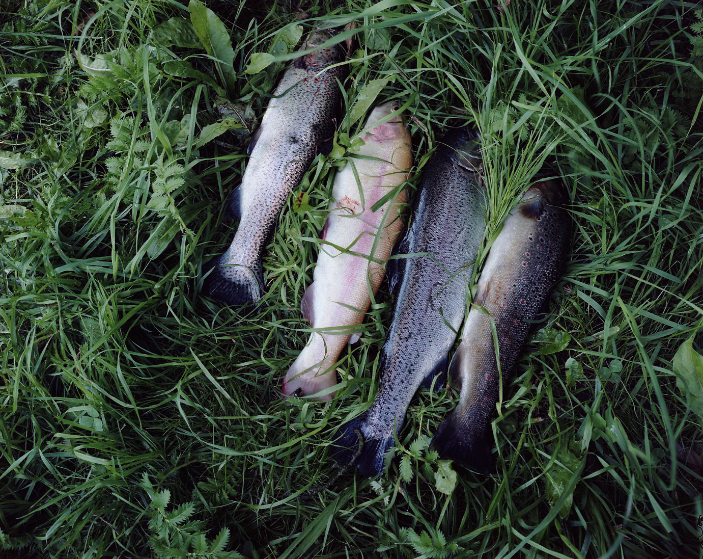 four_fish