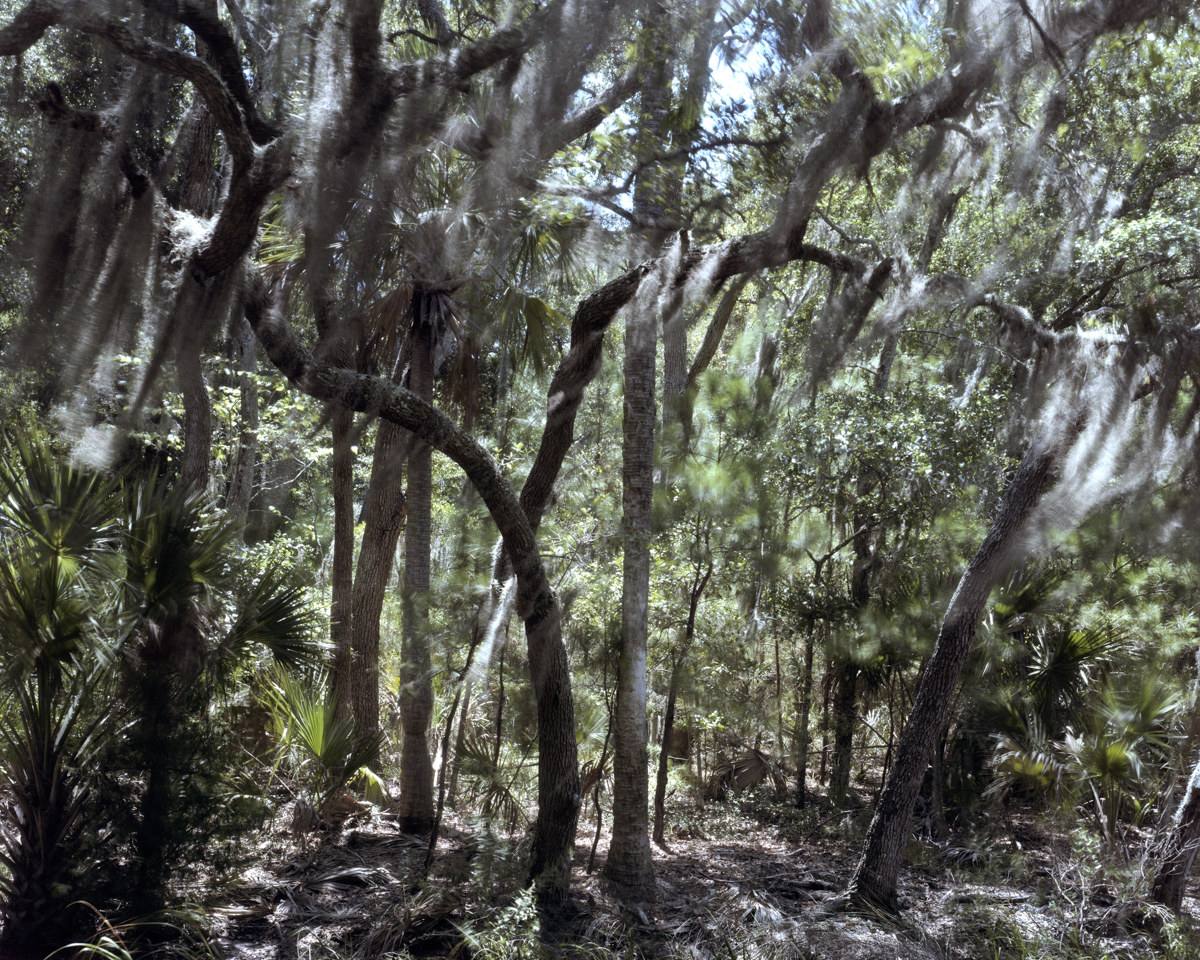 Forest, St. Helena Island, South Carolina 2010