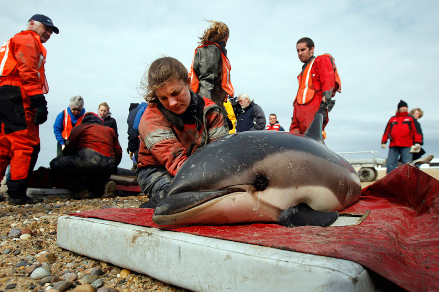 haines_rescue_ifaw10