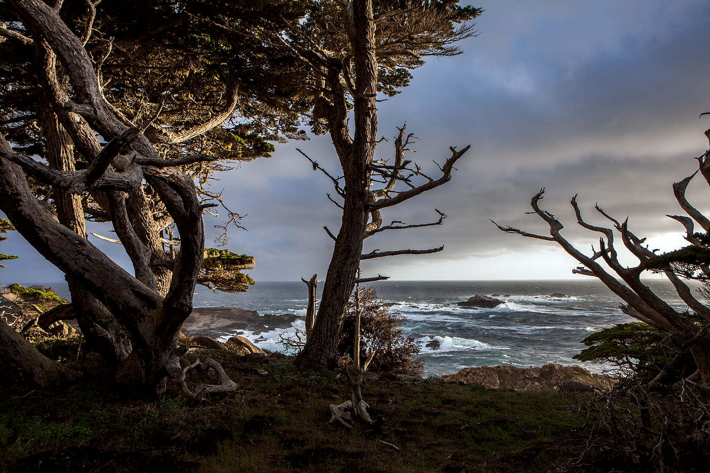 Wind swept cypress, Point Lobos State Reserve.