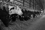 DairyFarm_0025
