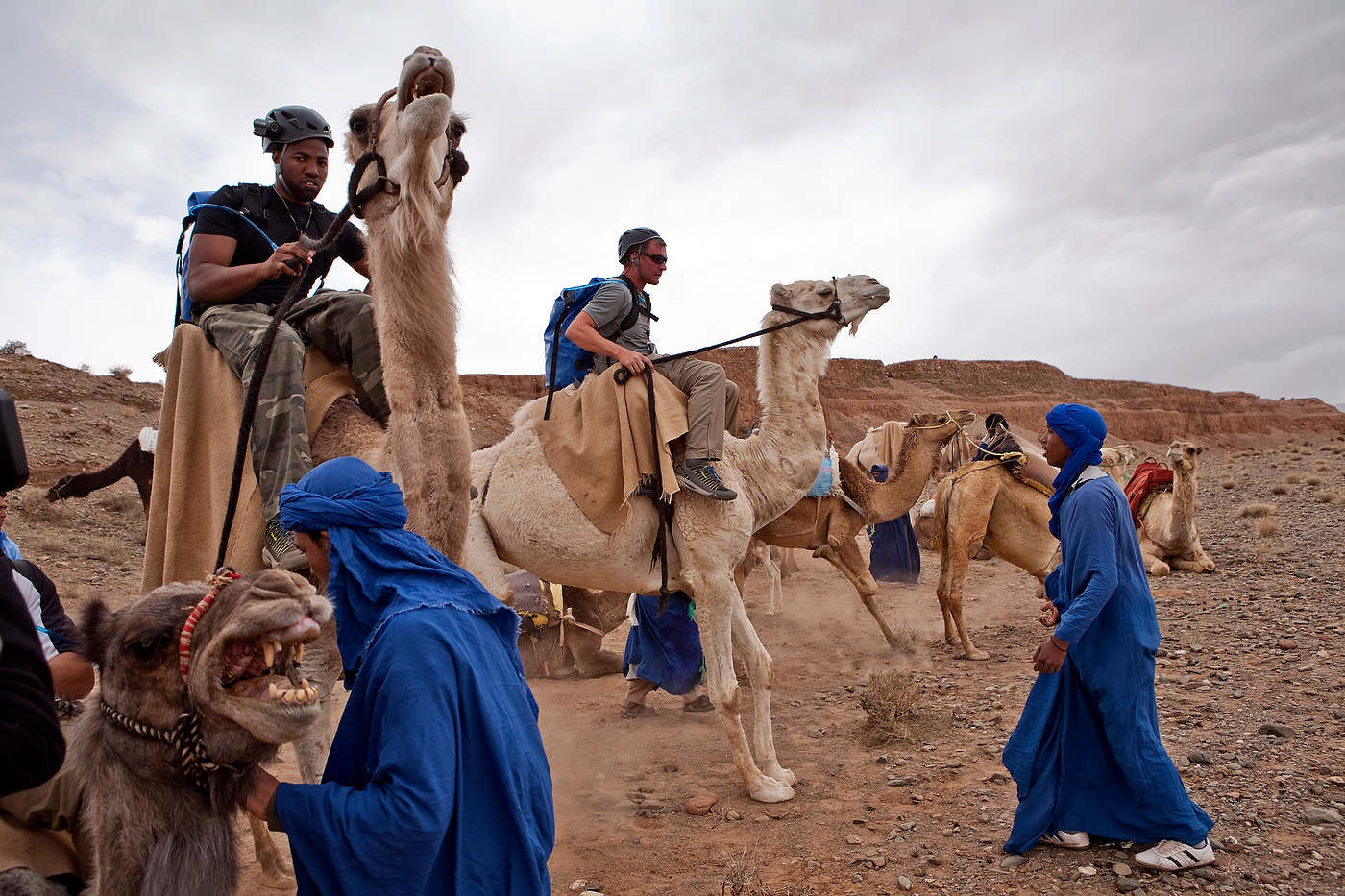 Teams struggle to mount their camels.