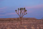 Joshua Tree, California.