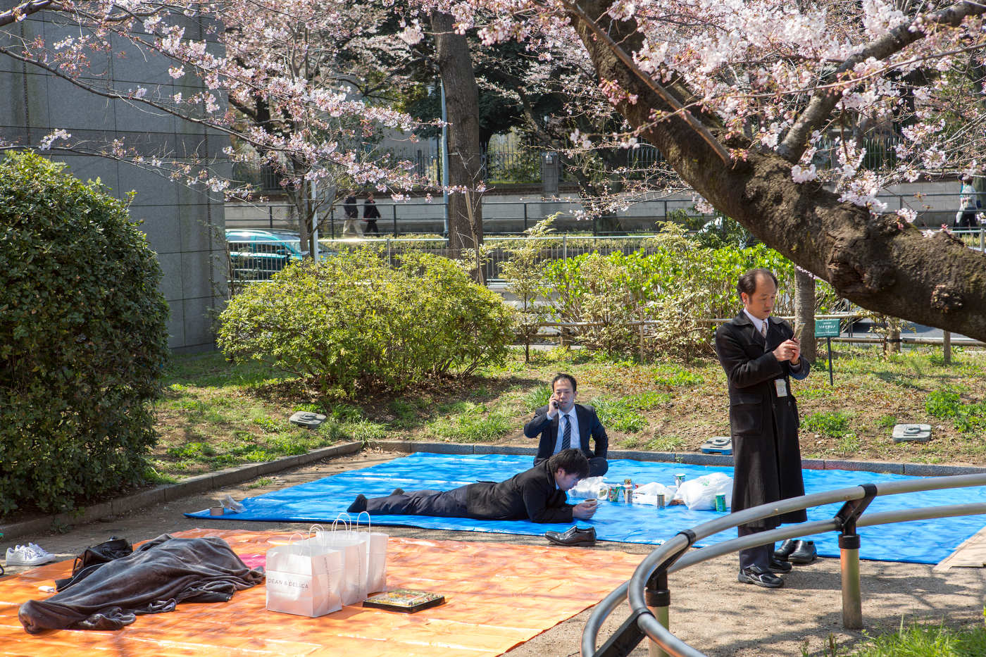 Salarymen get ready for lunch during Hanami.