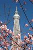 Sky Tree tower, Sumida.