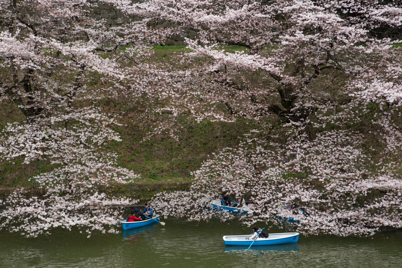Rented boats near the Imperial Palace during Hanami.
