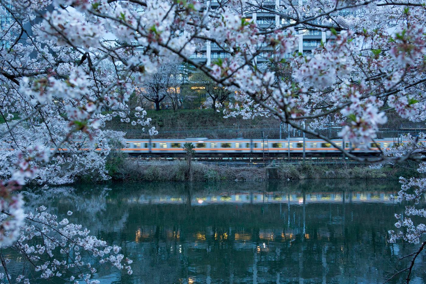 Cherry blossom and train alongside the Kandagawa River, Kagurazaka.