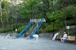 Early morning session of rajio taisō in Edogawa park, Shinjuku-ku.