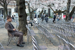 CENTRAL TOKYO, JAPAN - APRIL 2017: A visitor enjoys thecherry blossom during Hanami at the Yasukuni Shrine. Hanami, or {quote}flower viewing{quote}, is the Japanese traditional custom of enjoying the transient beauty of flowers; flowers ({quote}hana{quote}) are in this case almost always referring to those of the cherry ({quote}sakura{quote}) or, less frequently, plum ({quote}ume{quote}) trees. From the end of March to early May, cherry trees bloom all over Japan. The blossom forecast (sakura-zensen) {quote}cherry blossom front{quote} is announced each year by the weather bureau, and is watched carefully by those planning hanami as the blossoms only last a week or two. In modern-day Japan, hanami mostly consists of having an outdoor party beneath the sakura during daytime or at night. Hanami at night is called yozakura {quote}night sakura{quote}. In many places, temporary paper lanterns are hung for the purpose of yozakura. The Yasukuni Shrine is a Shinto shrine in central Tokyo that commemorates Japan's war dead. The shrine was founded in 1869 with the purpose of enshrining those who have died in war for their country. The spirits of about 2.5 million people, who died in the conflicts accompanying the Meiji Restoration, in the Satsuma Rebellion, the First Sino-Japanese War, the Russo-Japanese War, the First World War, the Manchurian Incident, the Second Sino-Japanese War and the Pacific War, are enshrined at Yasukuni Shrine in form of written records, which note name, origin and date and place of death of everyone enshrined. A political controversy surrounds Yasukuni Shrine because since 1978, fourteen class A war criminals have been among the 2.5 million people enshrined at Yasukuni. Furthermore, the official visits by several Japanese prime ministers and cabinet members to the shrine since 1975 have been causing concerns regarding a violation of the principle of separation of church and state. Next to the shrine buildings stands the Yushukan, a large museum that 
