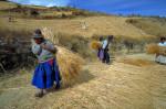 Farmers, Altiplano, Bolivia.