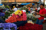Flower market, Santo Domingo, Dominican Republic, for National Geographic Books.