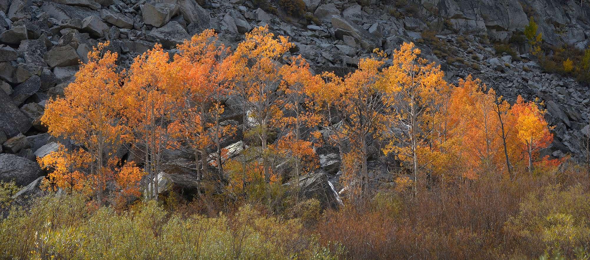 395-Aspen-Color-on-Black-Rock---web-version---Horizontal